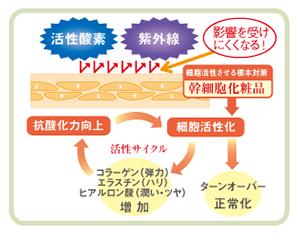 幹細胞化粧品図